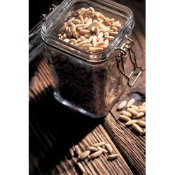 24 bocaux Le Carré dorés 350 ml